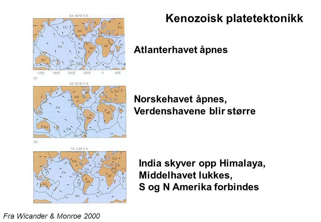 Kenozoisk platetektonikk Atlanterhavet åpnes Fra Wicander & Monroe 2000 Norskehavet åpnes, Verdenshavene blir større India skyver opp Himalaya, Middelhavet lukkes, S og N Amerika forbindes