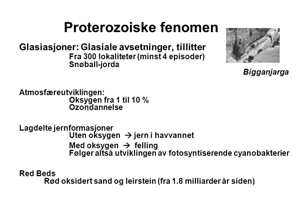 16 Proterozoiske fenomen Glasiasjoner: Glasiale avsetninger, tillitter Fra 300 lokaliteter (minst 4 episoder) Snøball-jorda Bigganjarga Atmosfæreutvik
