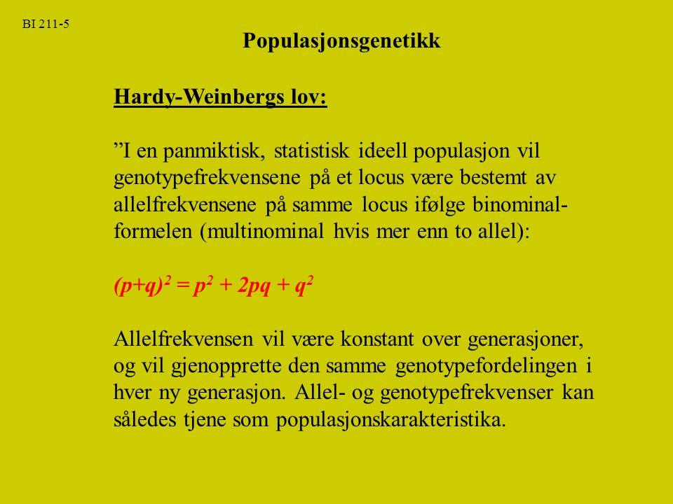 """Populasjonsgenetikk BI 211-5 Hardy-Weinbergs lov: """"I en panmiktisk, statistisk ideell populasjon vil genotypefrekvensene på et locus være bestemt av a"""