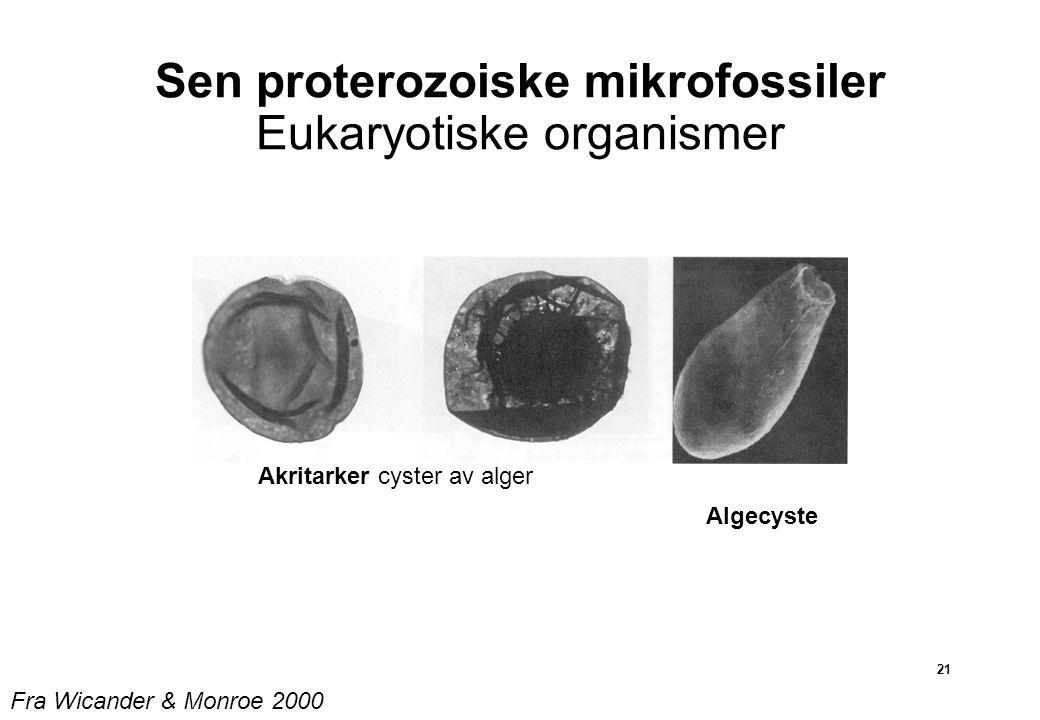 21 Sen proterozoiske mikrofossiler Eukaryotiske organismer Akritarker cyster av alger Algecyste Fra Wicander & Monroe 2000