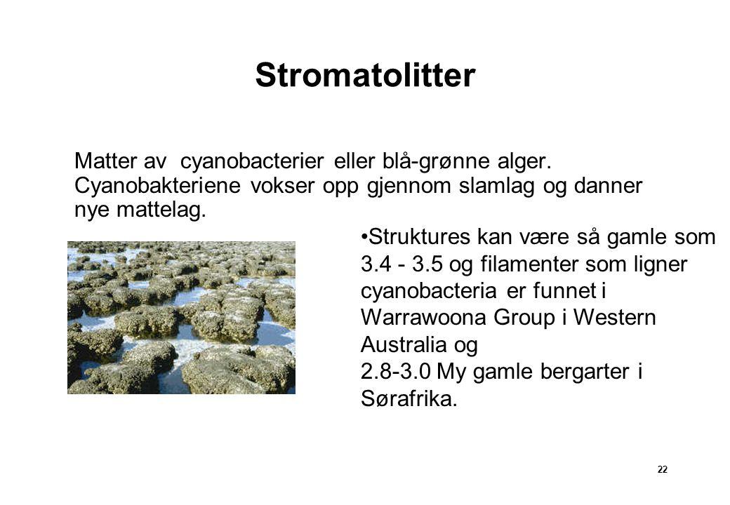 22 Stromatolitter Matter Matter av cyanobacterier eller blå-grønne alger. Cyanobakteriene vokser opp gjennom slamlag og danner nye mattelag. Strukture