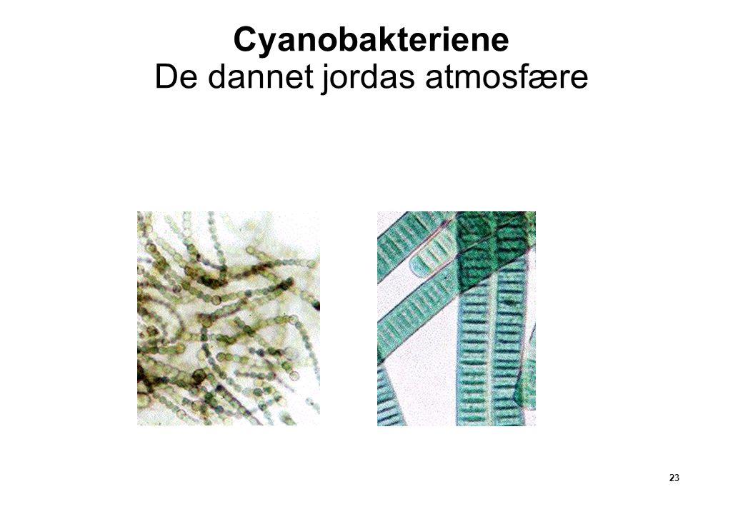 23 Cyanobakteriene De dannet jordas atmosfære