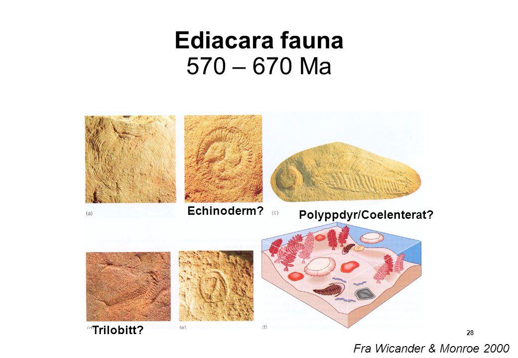 28 Ediacara fauna 570 – 670 Ma Echinoderm.Trilobitt.