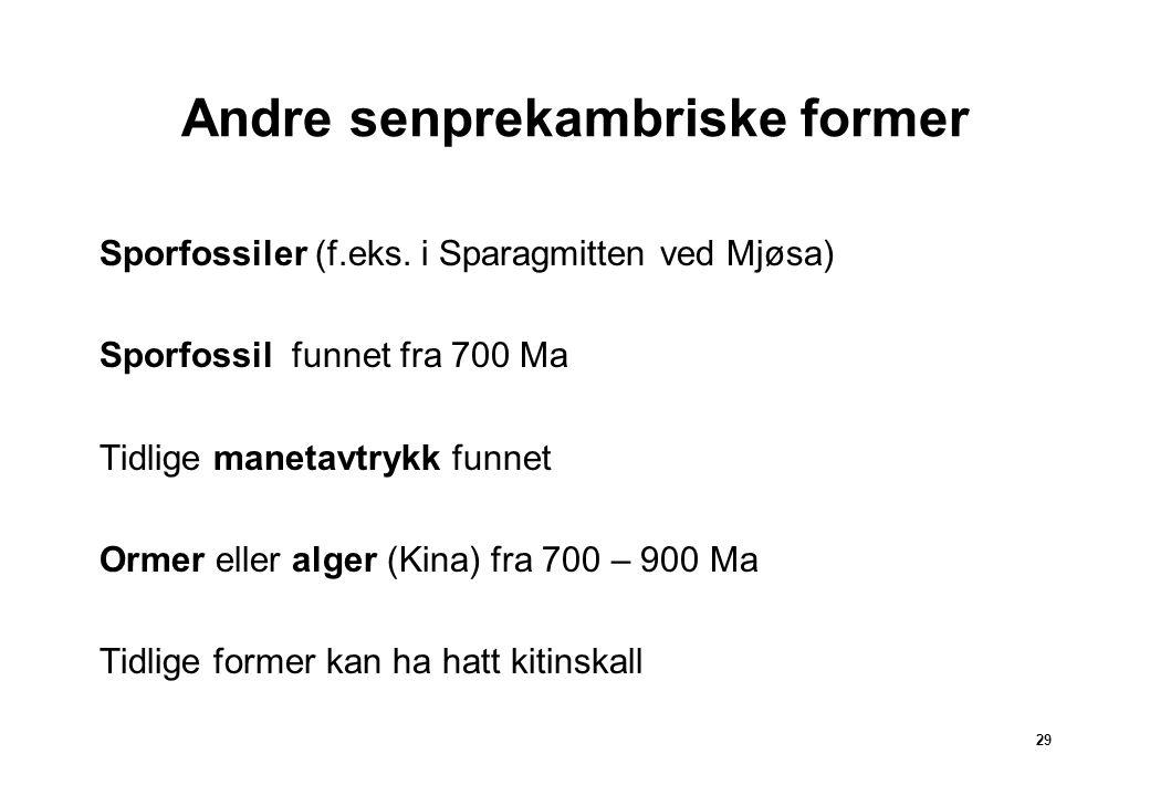29 Andre senprekambriske former Sporfossiler (f.eks.