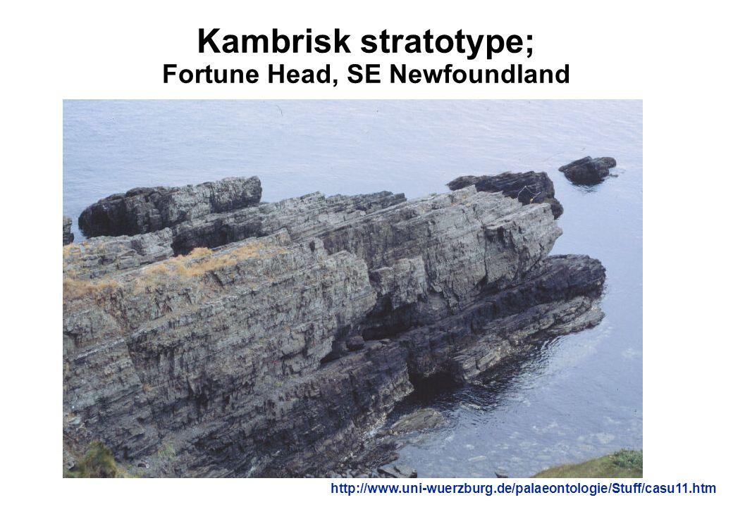 Kambrisk stratotype; Fortune Head, SE Newfoundland http://www.uni-wuerzburg.de/palaeontologie/Stuff/casu11.htm