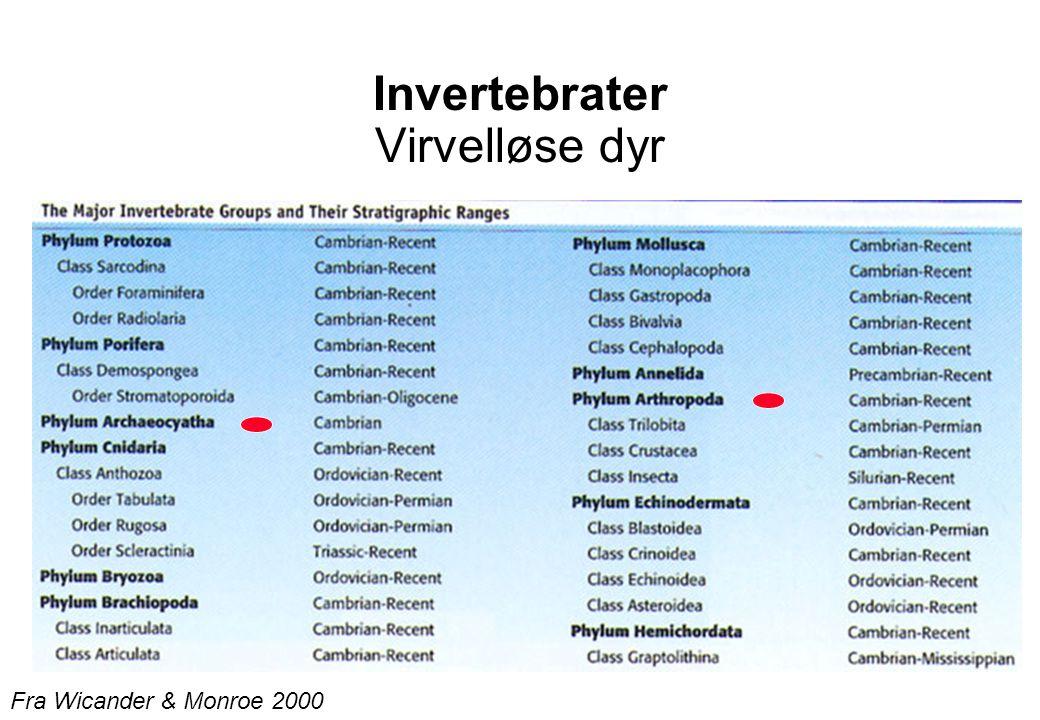 Invertebrater Virvelløse dyr Fra Wicander & Monroe 2000
