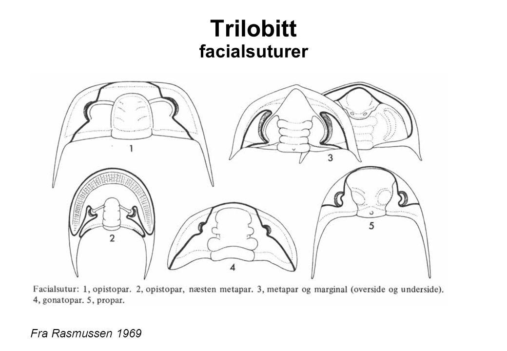 Trilobitt facialsuturer Fra Rasmussen 1969