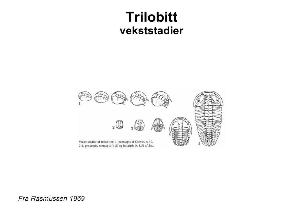 Trilobitt vekststadier Fra Rasmussen 1969