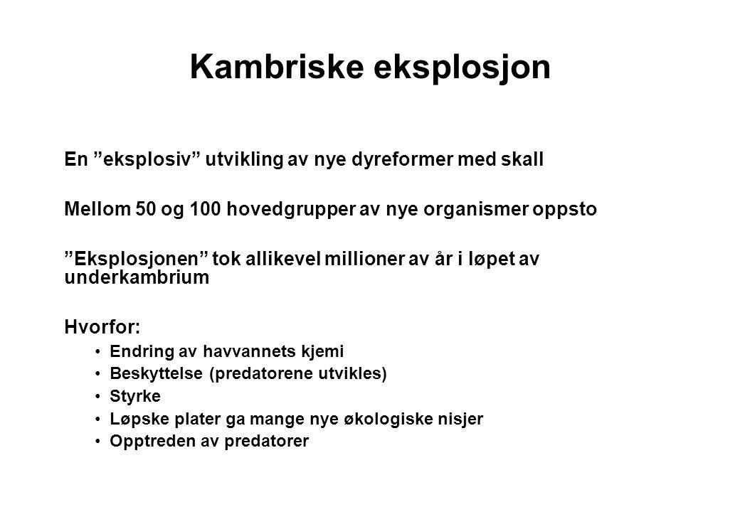 Trilobitt Sammenrullingsformer og øyetyper Fra Rasmussen 1969