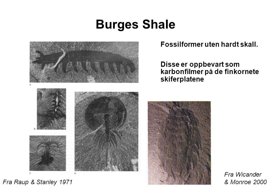 Burges Shale Fossilformer uten hardt skall. Disse er oppbevart som karbonfilmer på de finkornete skiferplatene Fra Raup & Stanley 1971 Fra Wicander &