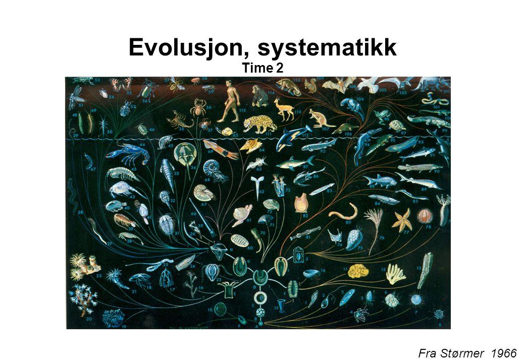 Evolusjon, systematikk Time 2 Fra Størmer 1966