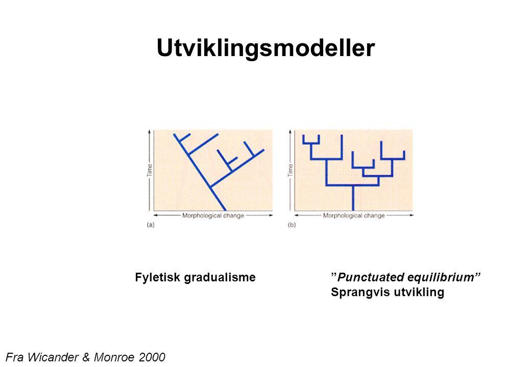 "Utviklingsmodeller Fyletisk gradualisme""Punctuated equilibrium"" Sprangvis utvikling Fra Wicander & Monroe 2000"