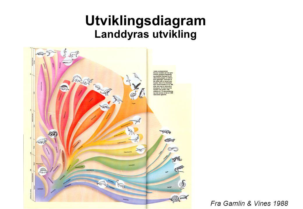 Utviklingsdiagram Landdyras utvikling Fra Gamlin & Vines 1988