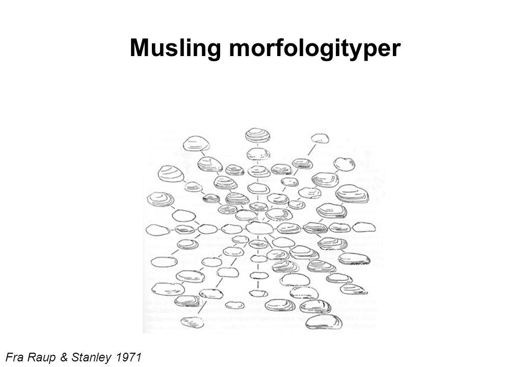 Musling morfologityper Fra Raup & Stanley 1971