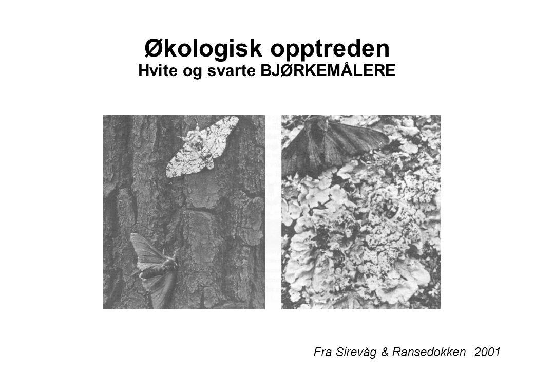 Økologisk opptreden Hvite og svarte BJØRKEMÅLERE Fra Sirevåg & Ransedokken 2001