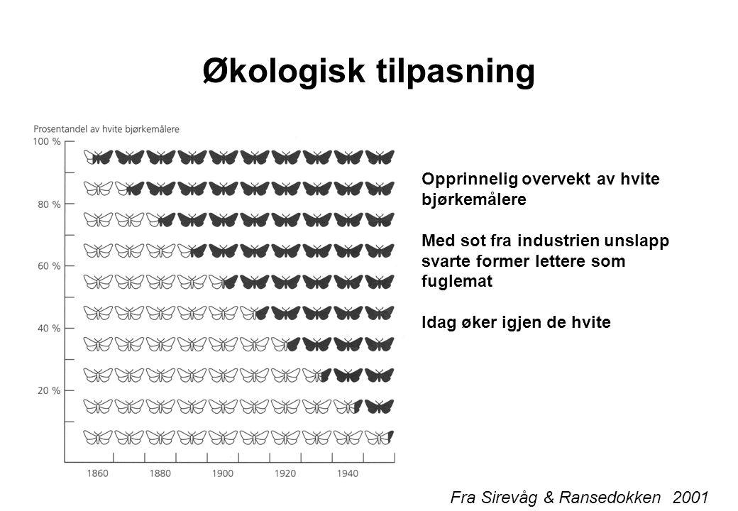 Økologisk tilpasning Fra Sirevåg & Ransedokken 2001 Opprinnelig overvekt av hvite bjørkemålere Med sot fra industrien unslapp svarte former lettere so
