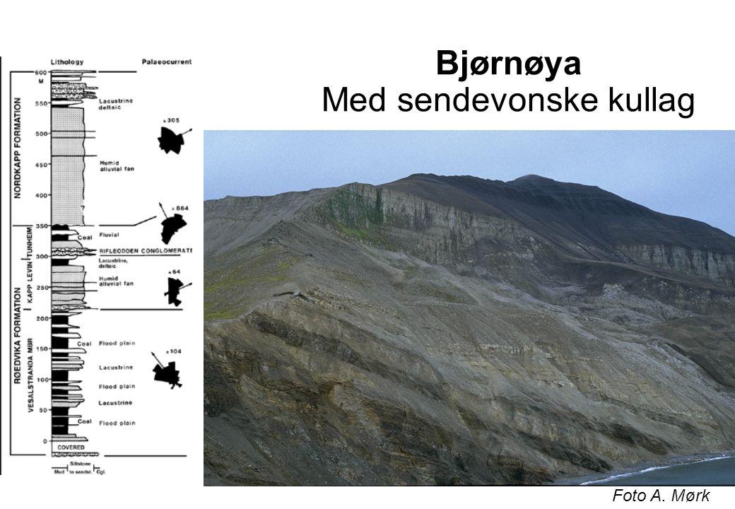 Devon på Bjørnøya verdens eldste drevne kull Foto A. Mørk
