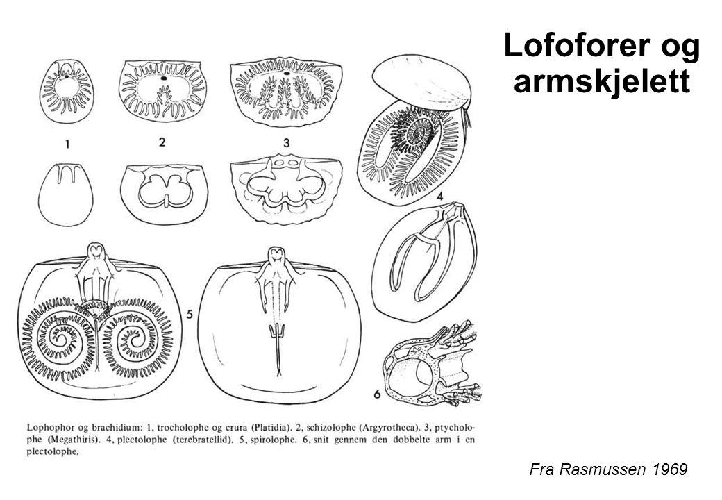 Lofoforer og armskjelett Fra Rasmussen 1969