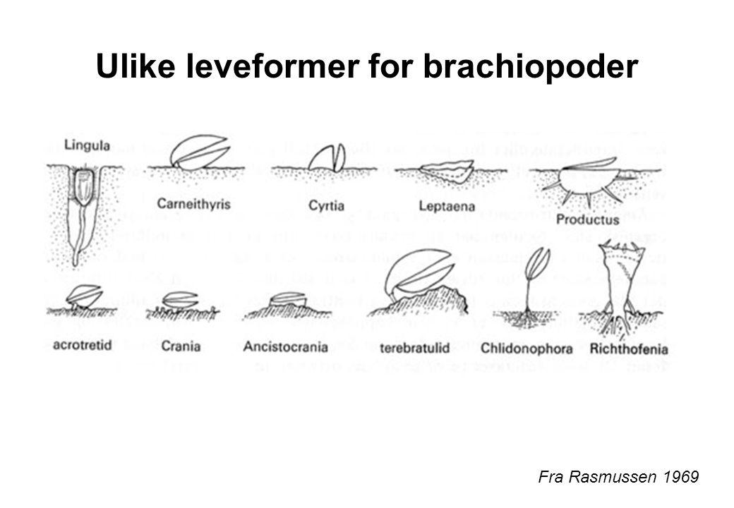 Ulike leveformer for brachiopoder Fra Rasmussen 1969