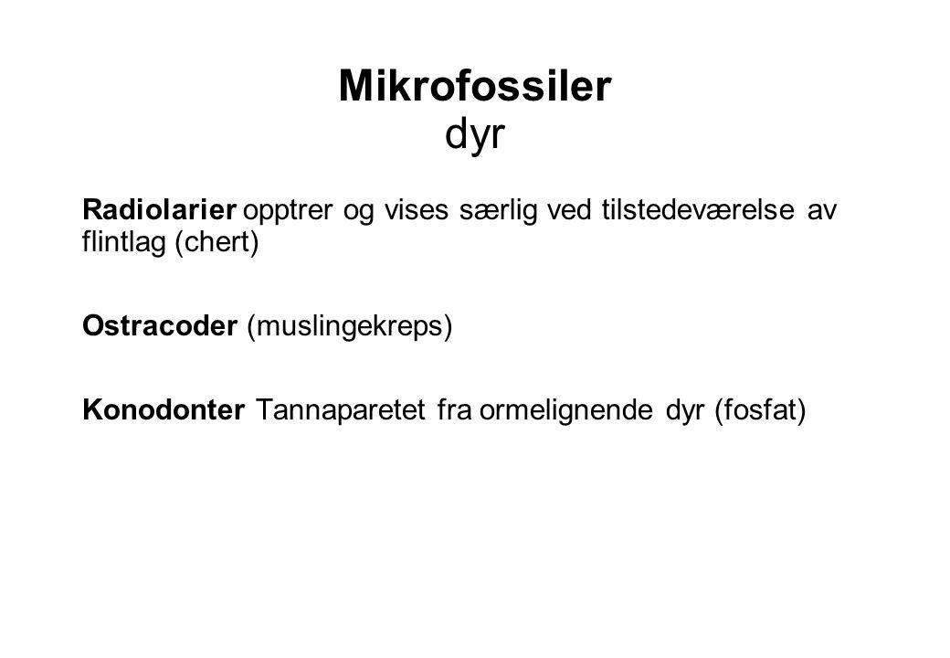 Mikrofossiler dyr Radiolarier opptrer og vises særlig ved tilstedeværelse av flintlag (chert) Ostracoder (muslingekreps) Konodonter Tannaparetet fra o