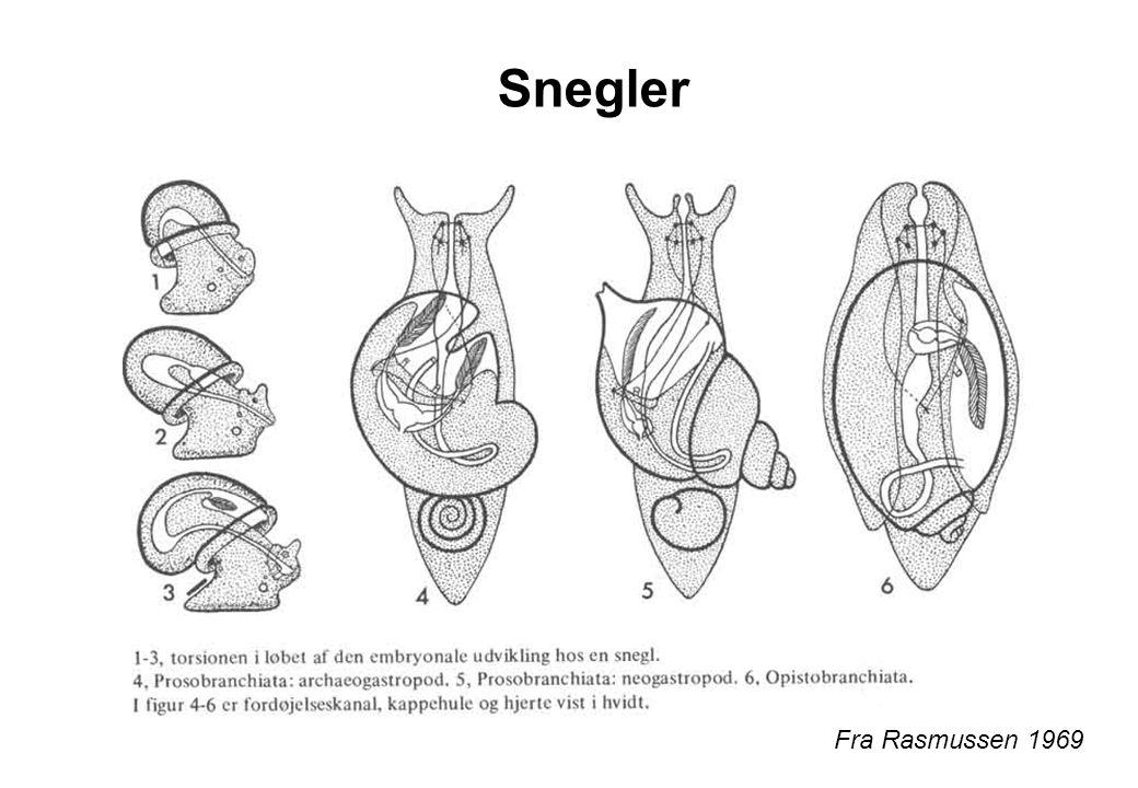 Fra Rasmussen 1969 Snegler