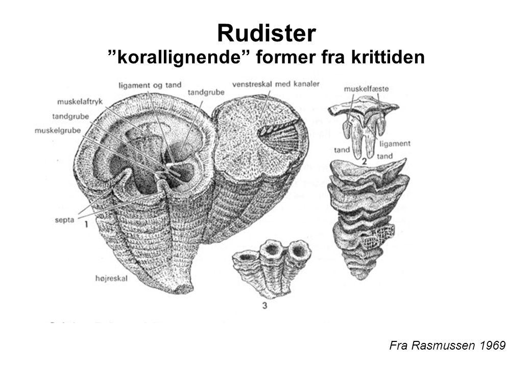 """Rudister """"korallignende"""" former fra krittiden Fra Rasmussen 1969"""