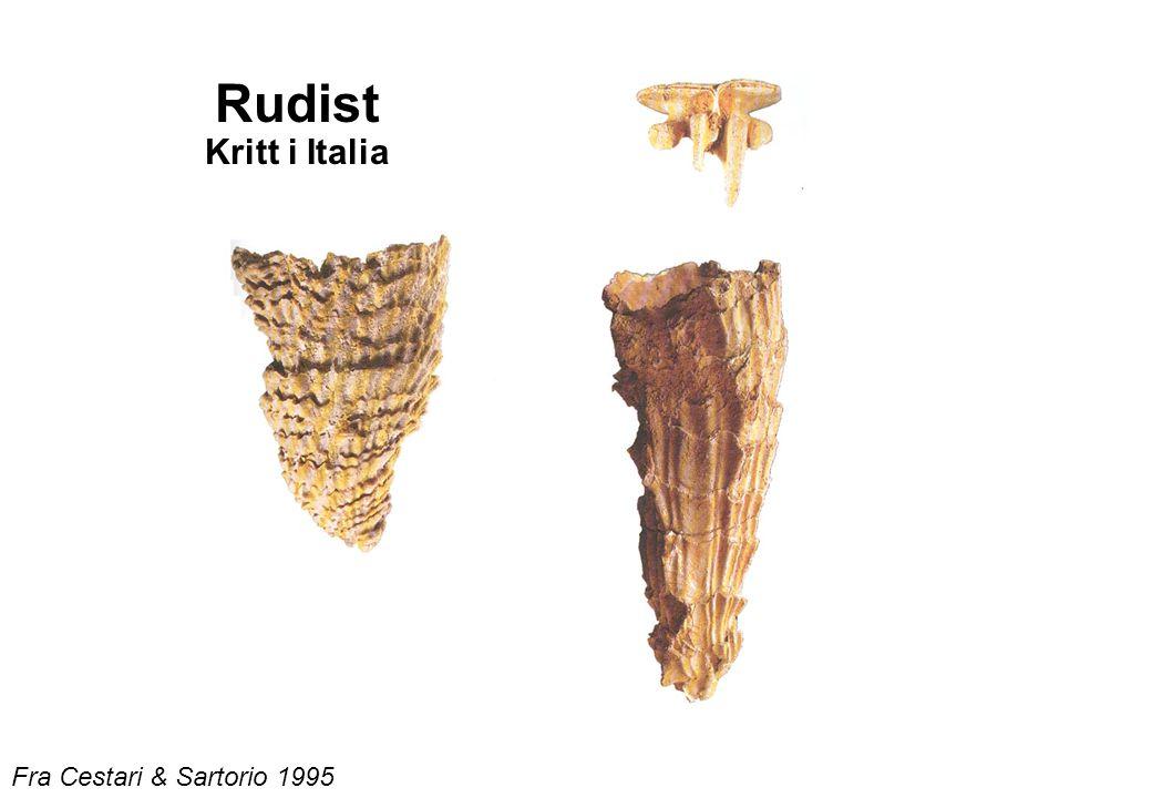 Fra Cestari & Sartorio 1995 Rudist Kritt i Italia