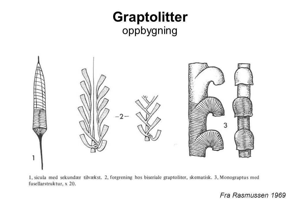 Graptolitter oppbygning Fra Rasmussen 1969