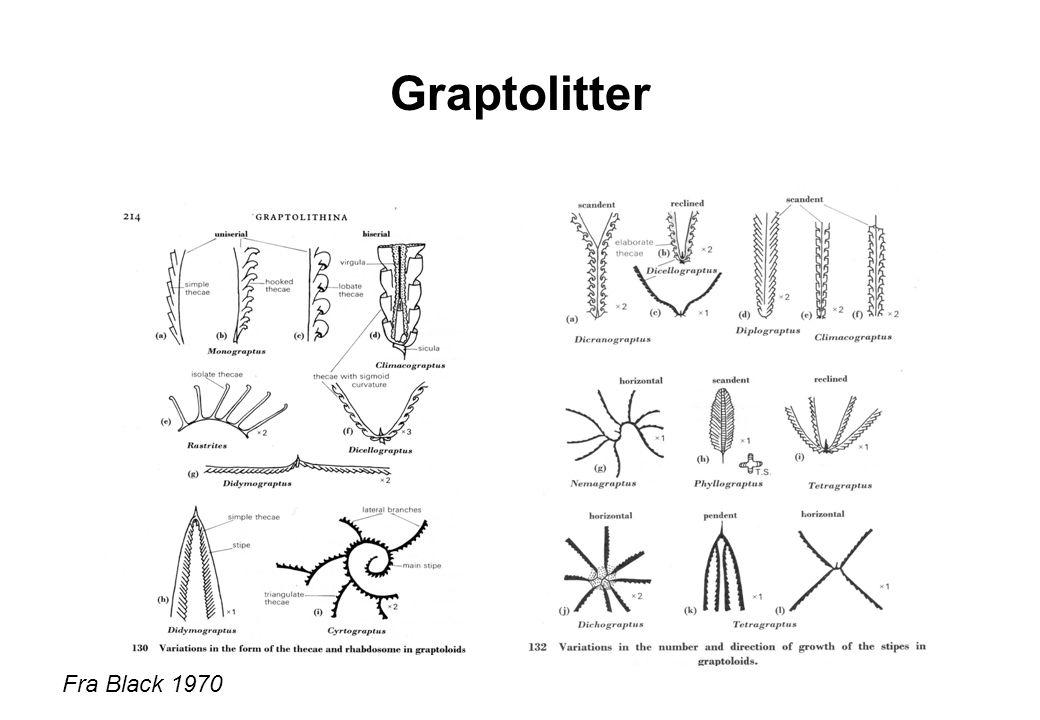 Graptolitter Fra Black 1970