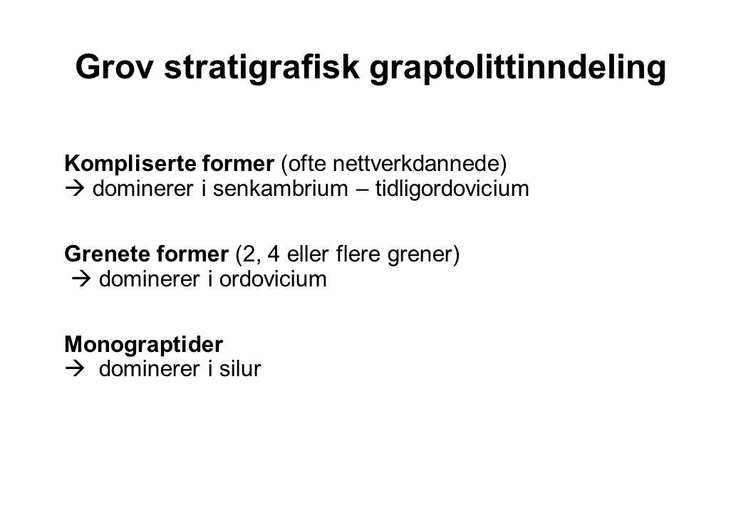 Grov stratigrafisk graptolittinndeling Kompliserte former (ofte nettverkdannede)  dominerer i senkambrium – tidligordovicium Grenete former (2, 4 ell