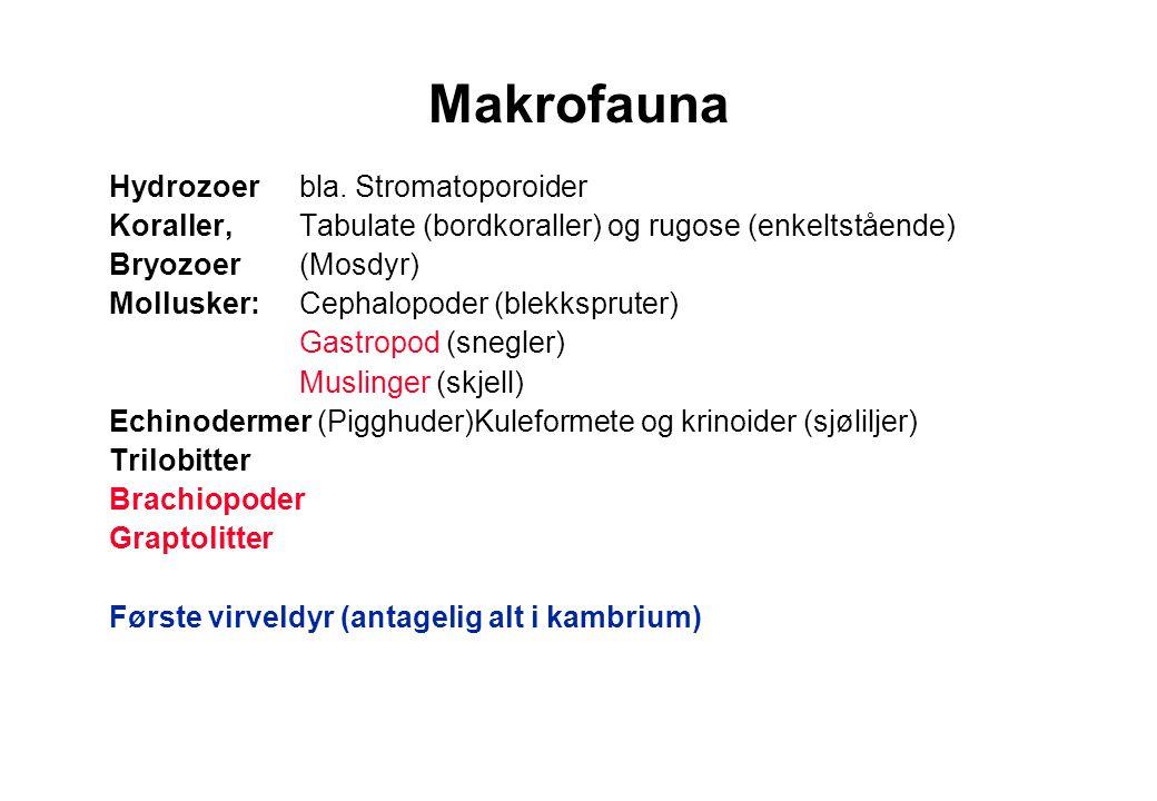 Makrofauna Hydrozoer bla. Stromatoporoider Koraller, Tabulate (bordkoraller) og rugose (enkeltstående) Bryozoer (Mosdyr) Mollusker: Cephalopoder (blek