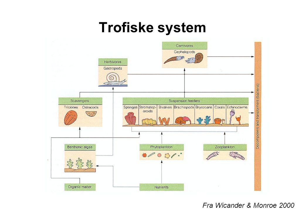 Trofiske system Fra Wicander & Monroe 2000