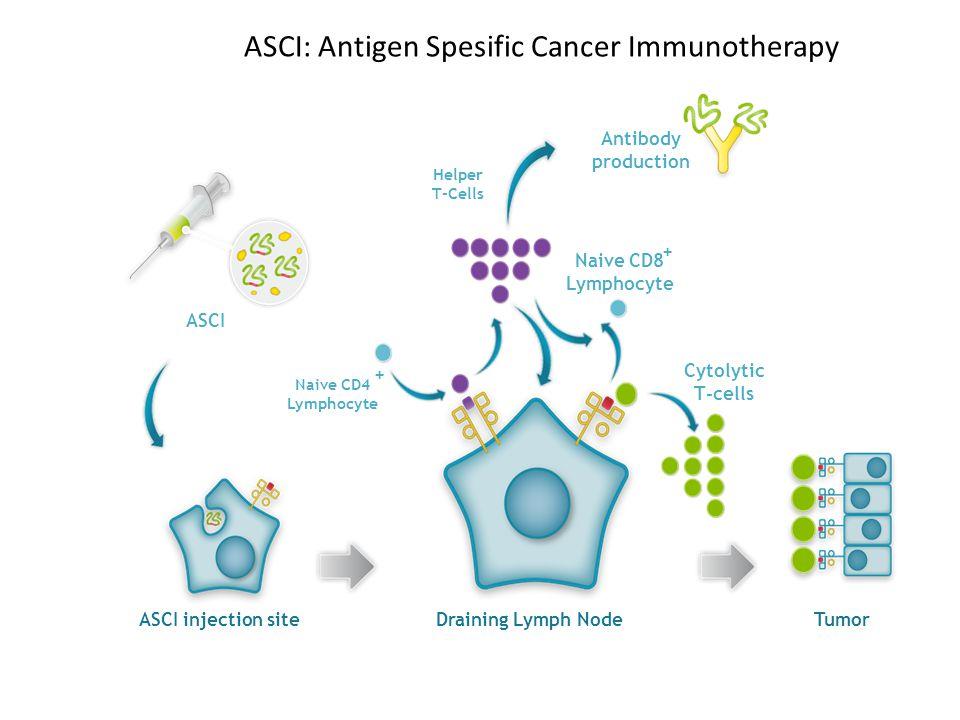 ASCI: Antigen Spesific Cancer Immunotherapy Tumor Cytolytic T-cells ASCI ASCI injection site Draining Lymph Node Naive CD8 Lymphocyte + Antibody produ