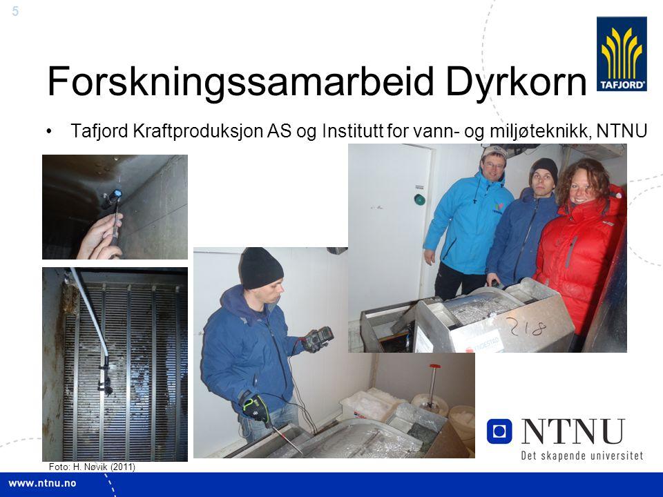 5 Forskningssamarbeid Dyrkorn Tafjord Kraftproduksjon AS og Institutt for vann- og miljøteknikk, NTNU Foto: H. Nøvik (2011)