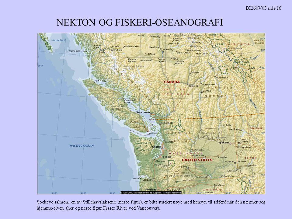 NEKTON OG FISKERI-OSEANOGRAFI BI260V03 side 16 Sockeye salmon, en av Stillehavslaksene (neste figur), er blitt studert nøye med hensyn til adferd når den nærmer seg hjemme-elven (her og neste figur Fraser River ved Vancouver).