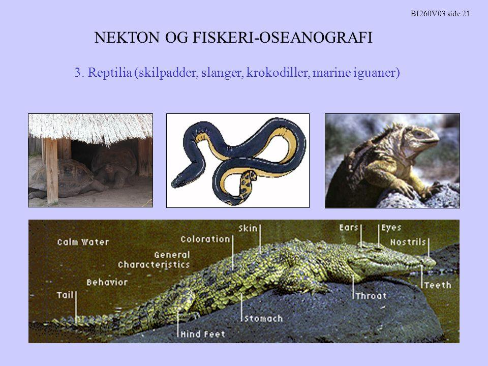 NEKTON OG FISKERI-OSEANOGRAFI BI260V03 side 21 3. Reptilia (skilpadder, slanger, krokodiller, marine iguaner)