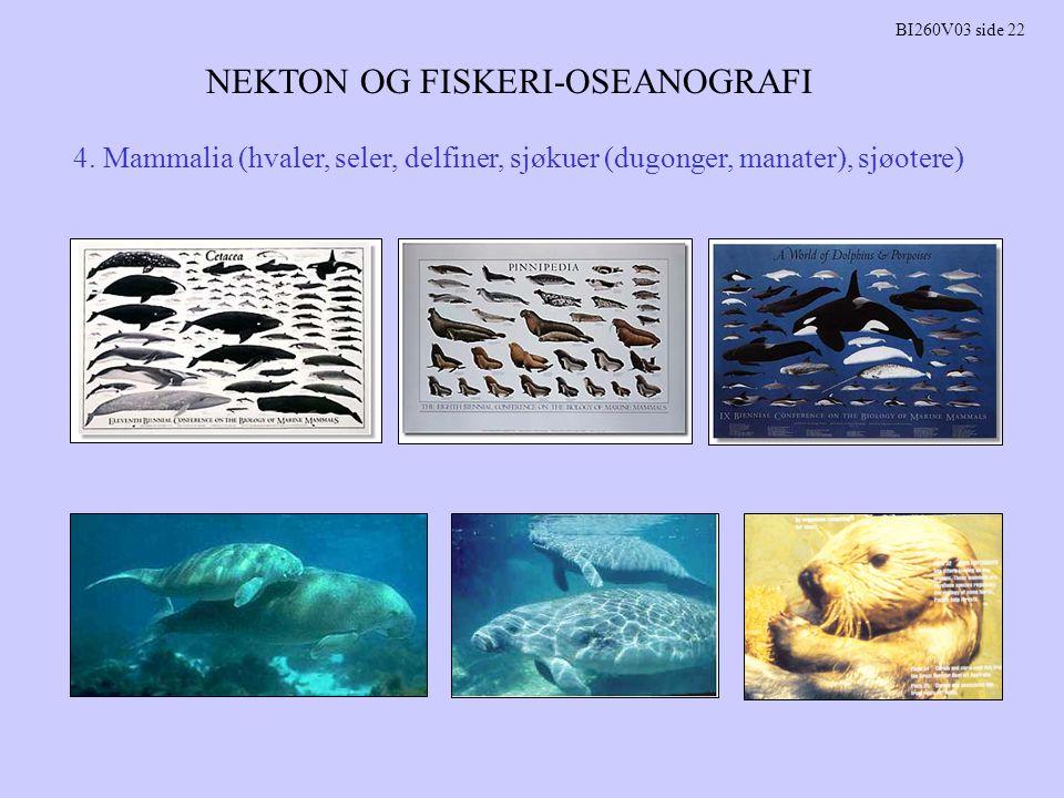 NEKTON OG FISKERI-OSEANOGRAFI BI260V03 side 22 4. Mammalia (hvaler, seler, delfiner, sjøkuer (dugonger, manater), sjøotere)