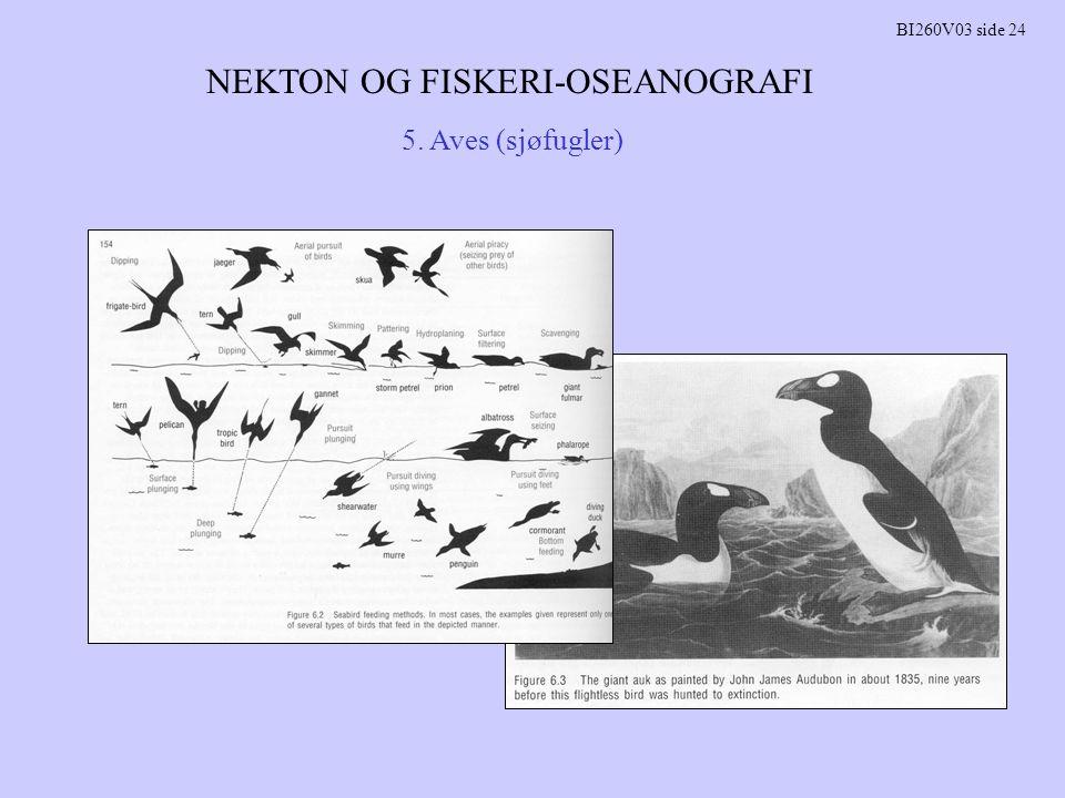 NEKTON OG FISKERI-OSEANOGRAFI BI260V03 side 24 5. Aves (sjøfugler)