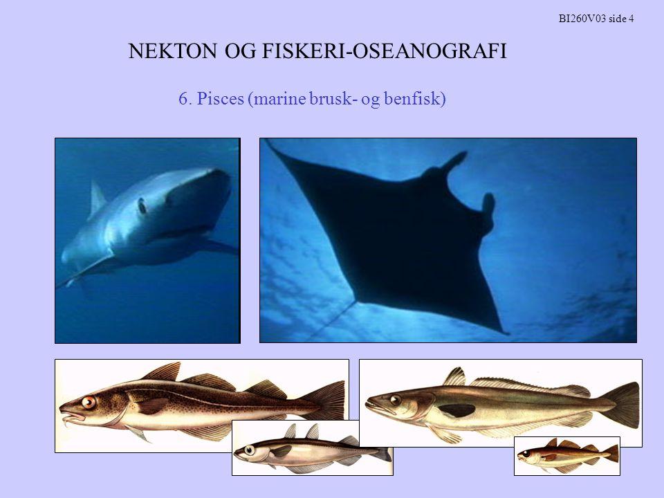 NEKTON OG FISKERI-OSEANOGRAFI BI260V03 side 4 6. Pisces (marine brusk- og benfisk)