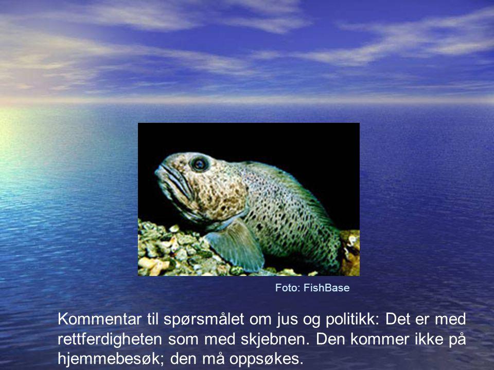 Foto: FishBase Kommentar til spørsmålet om jus og politikk: Det er med rettferdigheten som med skjebnen.