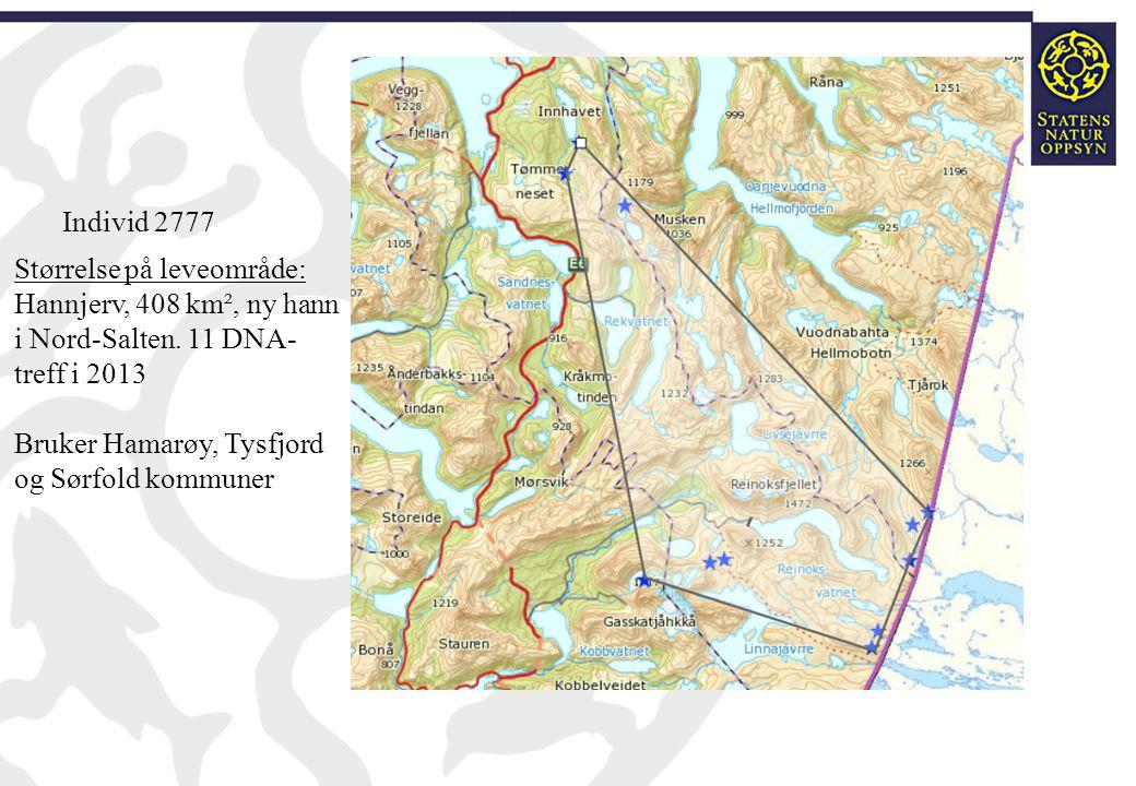 Størrelse på leveområde: Hannjerv, 408 km², ny hann i Nord-Salten. 11 DNA- treff i 2013 Bruker Hamarøy, Tysfjord og Sørfold kommuner Individ 2777