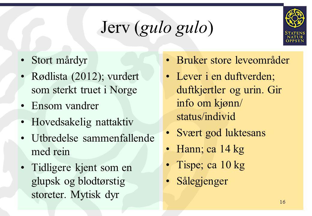Jerv (gulo gulo) Stort mårdyr Rødlista (2012); vurdert som sterkt truet i Norge Ensom vandrer Hovedsakelig nattaktiv Utbredelse sammenfallende med rei