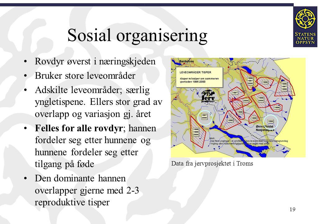 Sosial organisering Rovdyr øverst i næringskjeden Bruker store leveområder Adskilte leveområder; særlig yngletispene. Ellers stor grad av overlapp og