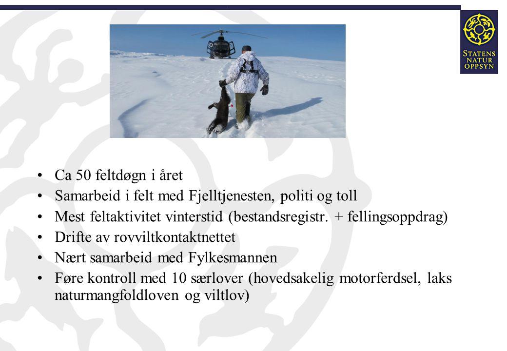 Ca 50 feltdøgn i året Samarbeid i felt med Fjelltjenesten, politi og toll Mest feltaktivitet vinterstid (bestandsregistr. + fellingsoppdrag) Drifte av
