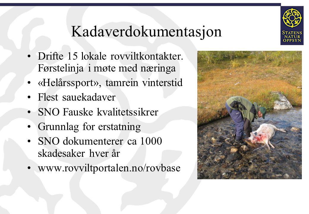 Kadaverdokumentasjon Drifte 15 lokale rovviltkontakter. Førstelinja i møte med næringa «Helårssport», tamrein vinterstid Flest sauekadaver SNO Fauske