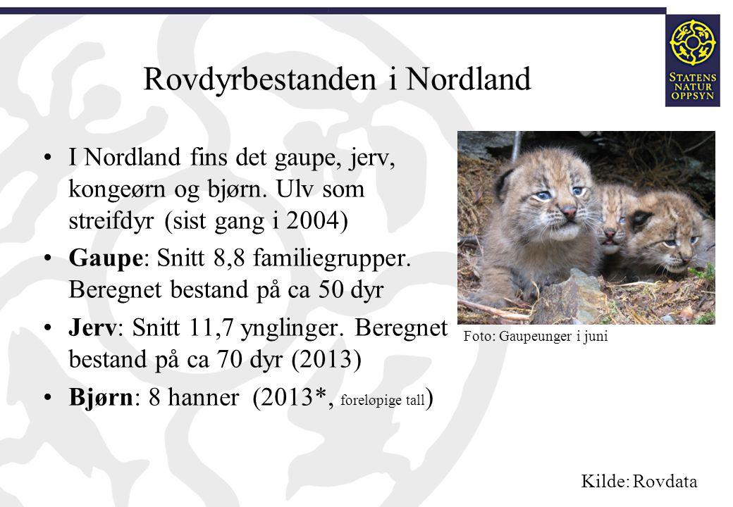 Rovdyrbestanden i Nordland I Nordland fins det gaupe, jerv, kongeørn og bjørn. Ulv som streifdyr (sist gang i 2004) Gaupe: Snitt 8,8 familiegrupper. B