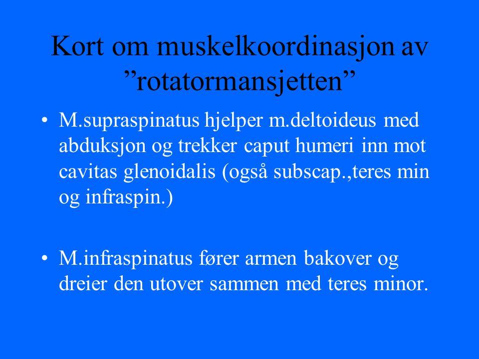 """Kort om muskelkoordinasjon av """"rotatormansjetten"""" M.supraspinatus hjelper m.deltoideus med abduksjon og trekker caput humeri inn mot cavitas glenoidal"""