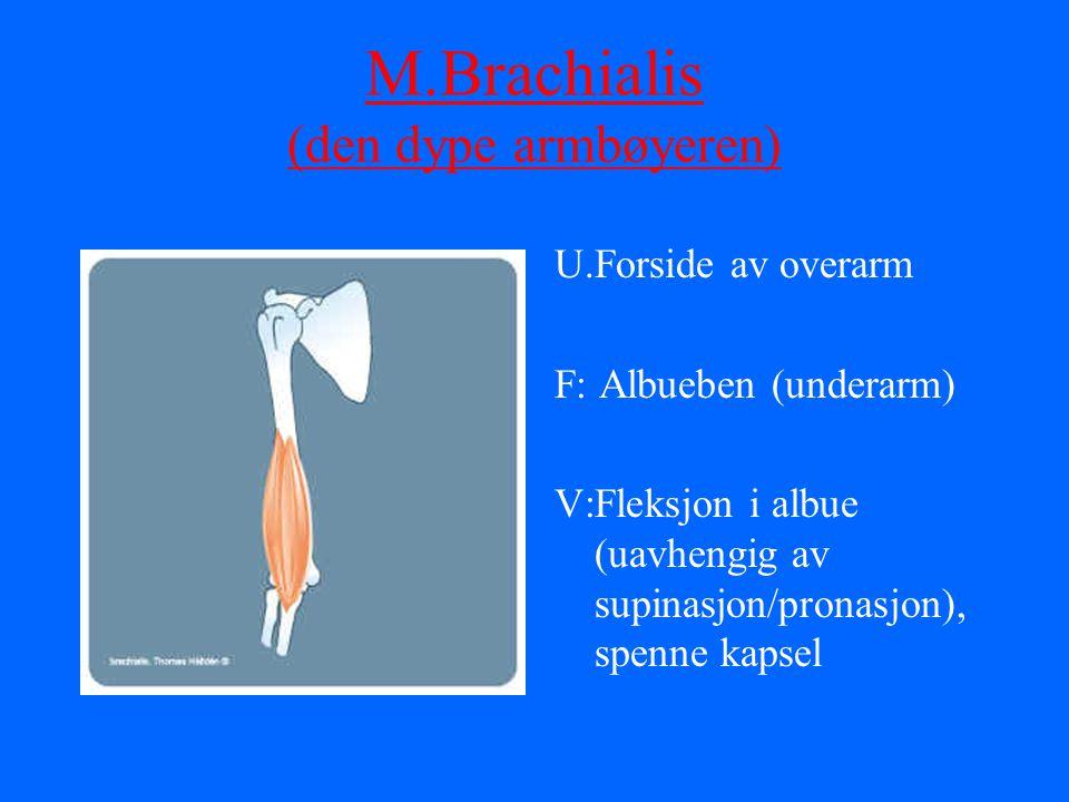 M.Brachialis (den dype armbøyeren) U.Forside av overarm F: Albueben (underarm) V:Fleksjon i albue (uavhengig av supinasjon/pronasjon), spenne kapsel
