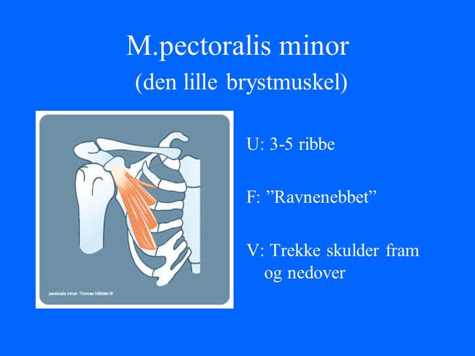 "M.pectoralis minor (den lille brystmuskel) U: 3-5 ribbe F: ""Ravnenebbet"" V: Trekke skulder fram og nedover"