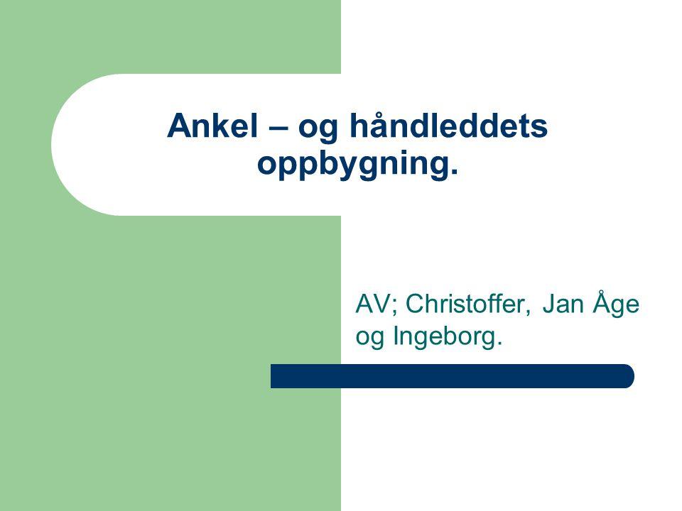 Ankel – og håndleddets oppbygning. AV; Christoffer, Jan Åge og Ingeborg.